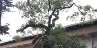 爱生态!新北树保创新局!民眾主动提列珍贵树木 - 中时电子报