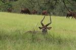 犀牛不买蔡英文帐 合照时一只只跑光光 - 中时电子报